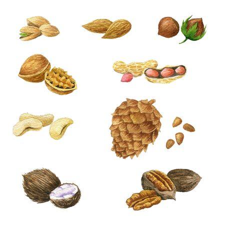 watercolor drawing nuts, hand drawn illustration