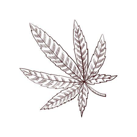 vector drawing cannabis leaf,hand drawn illustration