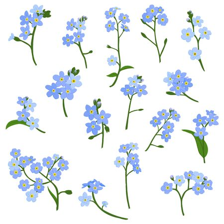 vector drawing blue flowers of forget-me-nots, Scorpion grasses, isolated floral elements at white background, hand drawn illustration