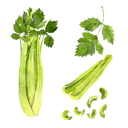 watercolor drawing green celery