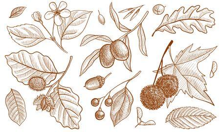 vector vintage drawing floral design