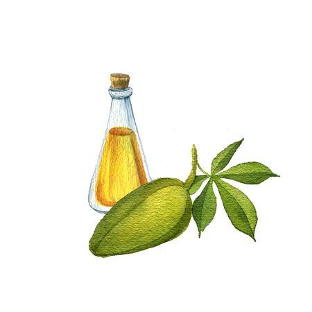 watercolor drawing kapok seed oil