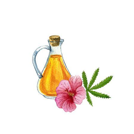 watercolor drawing kenaf seed oil