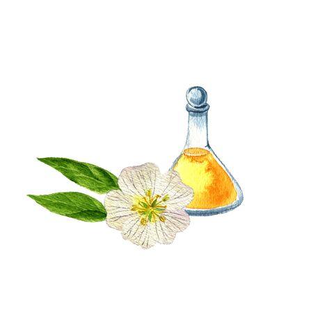 watercolor drawing meadowfoam seed oil