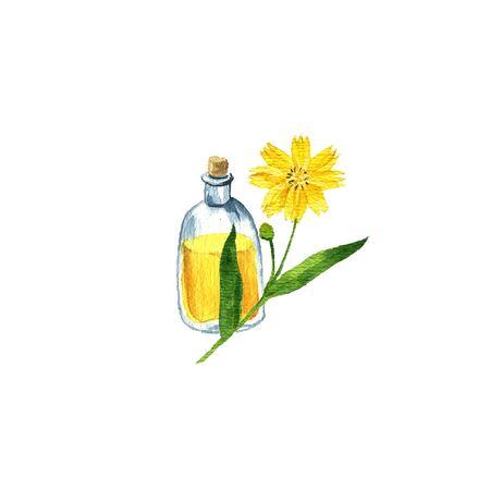 watercolor drawing ramtil oil Reklamní fotografie
