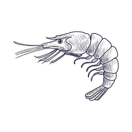vector drawing shrimp Reklamní fotografie