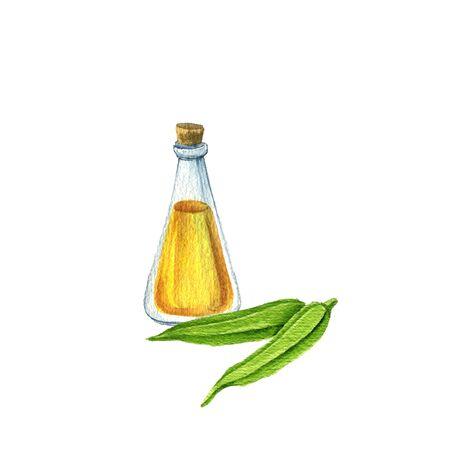 watercolor drawing okra seed oil Reklamní fotografie