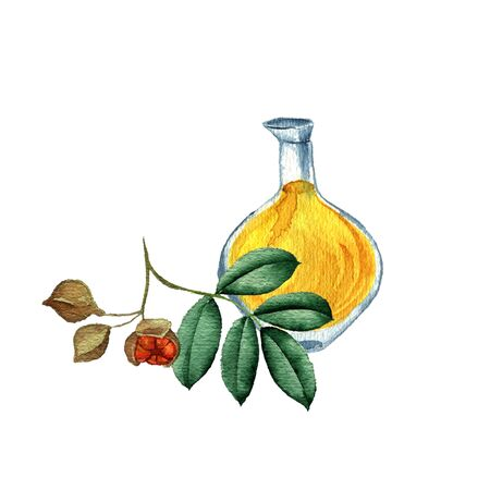 watercolor drawing mafura oil Reklamní fotografie