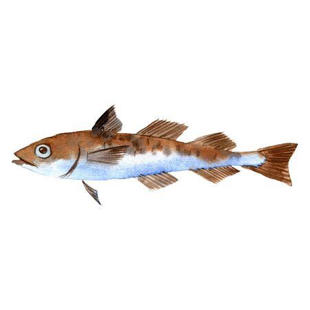 watercolor drawing fish,pollock Reklamní fotografie