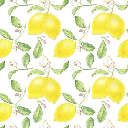 watercolor drawing branch of lemon
