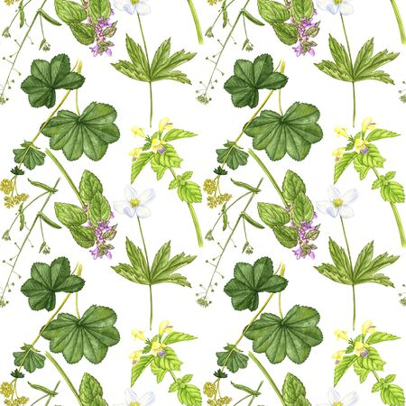 seamless pattern with wild plants and flowers