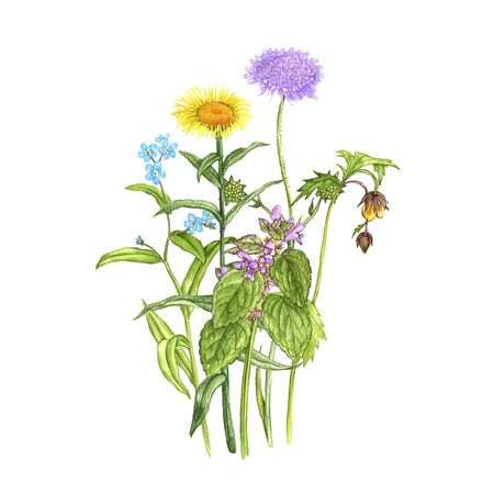 bouguet with wild plants and flowers, drawing by color pencils, field herbs, natural background, hand drawn illustration