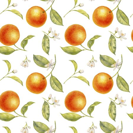 watercolor semless pattern with drawing branches of orange tree with flowers, leaves and oranges at white background, hand drawn illustration