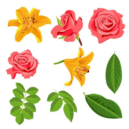 vector drawing flowers and leaves, roses, lilies ,isolated floral elements at white background, hand drawn illustration