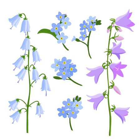vector drawing bell flowers, campanula and forget-me-nots,, isolated floral elements at white background, hand drawn illustration