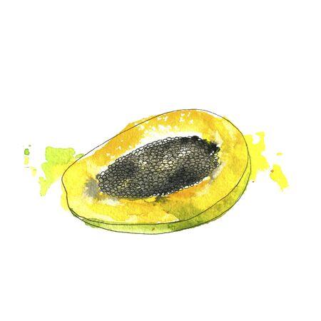 watercolor drawing half of papaya with paint splashes, hand drawn illustration