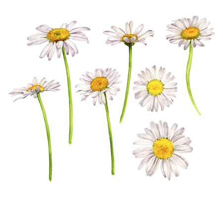 watercolor daisies flowers, drawing by watercolor Archivio Fotografico