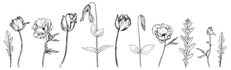 vector drawing flowers, plants and grass, set of floral elements, hand drawn illustration