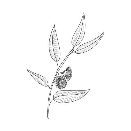 vector drawing eucalyptus Векторная Иллюстрация