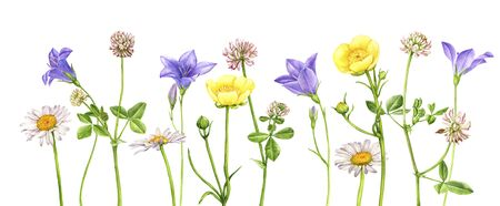 watercolor drawing wild flowers , floral background, hand drawn illustration