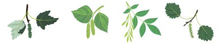 vector drawing branches of trees with leaves, poplar, birch, ,ash and aspen, hand drawn illustration Vettoriali