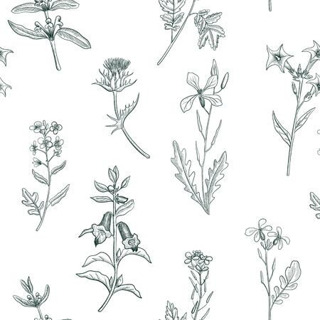 Vector seamless pattern with drawing wild plants, herbs and flowers, botanical illustration, natural floral background Çizim