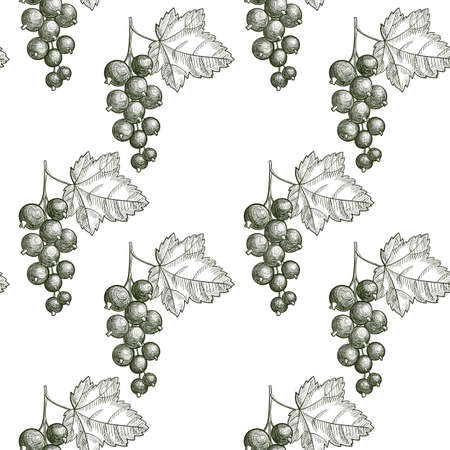 vector drawing seamless pattern with blackcurrant berries , hand drawn illustration
