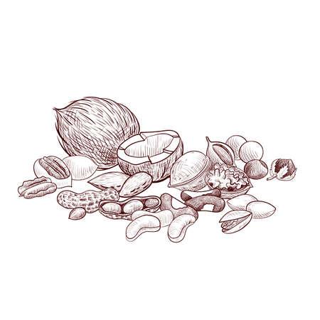 vector drawing nuts, hand drawn illustration Illusztráció