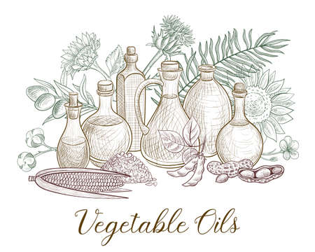 vector drawing bottles of major vegetable oils and plants, nuts and seds ,hand drawn illustration Illusztráció