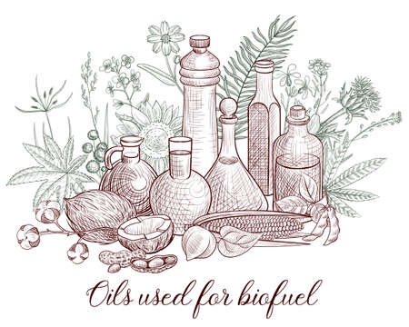 vector drawing vegetable oils used as biofuel , biodiesel hand drawn illustration
