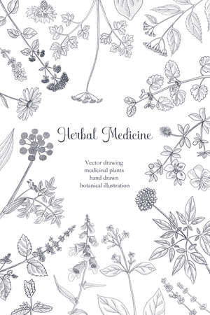 vector drawing floral vintage template