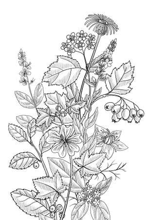 vector drawing floral vintage template Векторная Иллюстрация