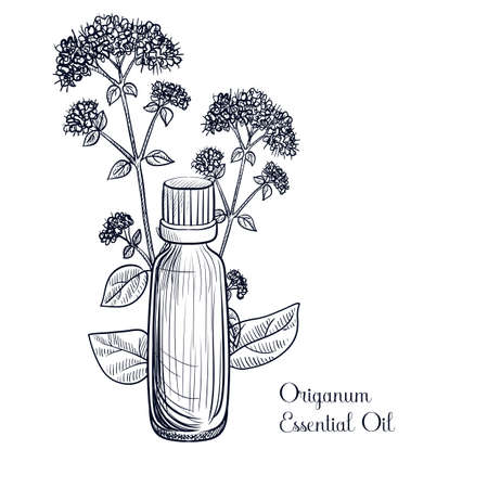 vector drawing origanum essential oil