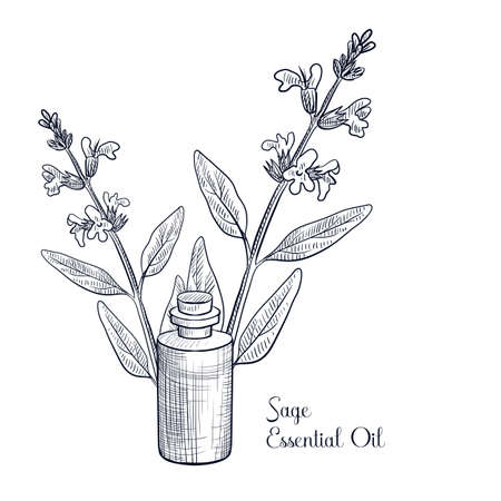 vector drawing sage essential oil
