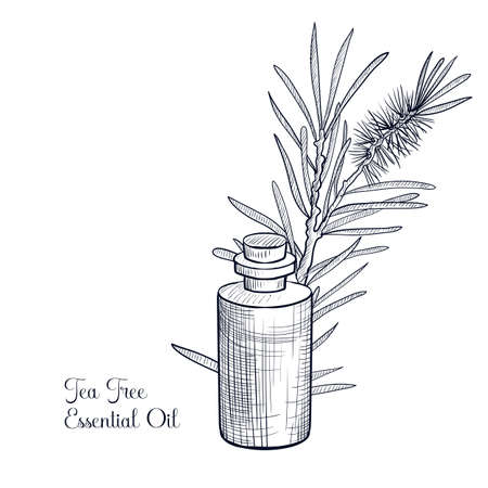 vector drawing tea tree essential oil