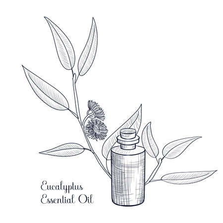 vector drawing eucalyptus essential oil