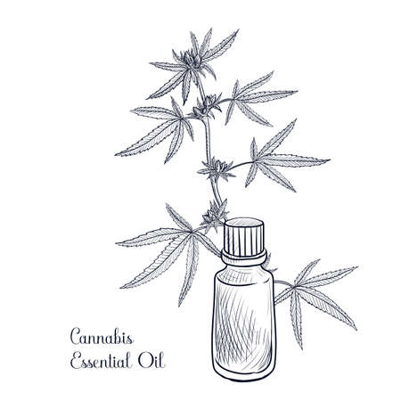 vector drawing cannabis essential oil