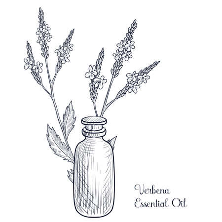vector drawing verbena essential oil