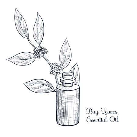 vector drawing bay leaves essential oil Ilustração