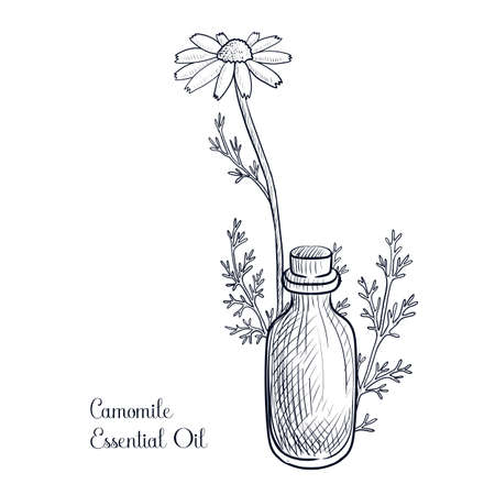 vector drawing camomile essential oil