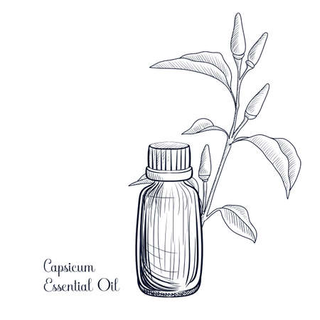 vector drawing capsicum essential oil