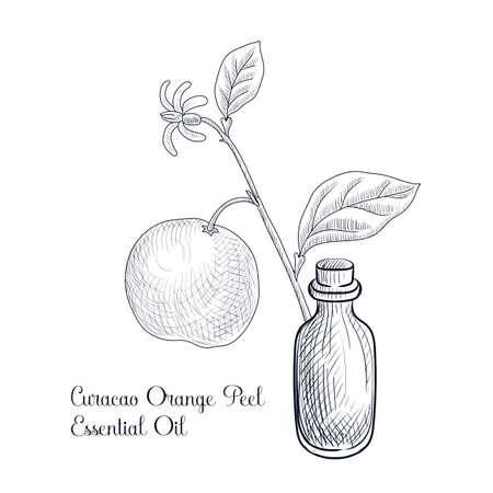 vector drawing curacao orange peel essential oil