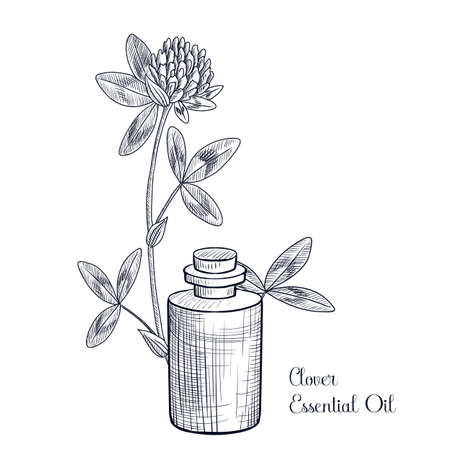 vector drawing clover essential oil