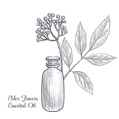 vector drawing elder flowers essential oil