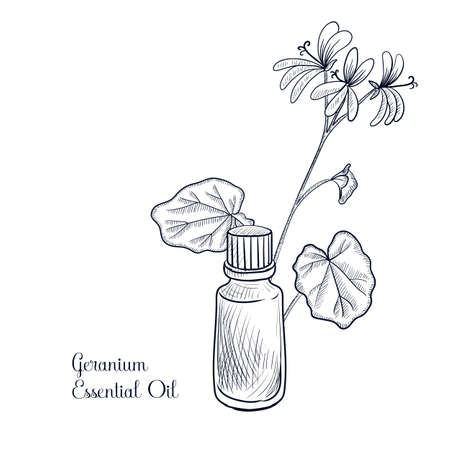 vector drawing geranium essential oil