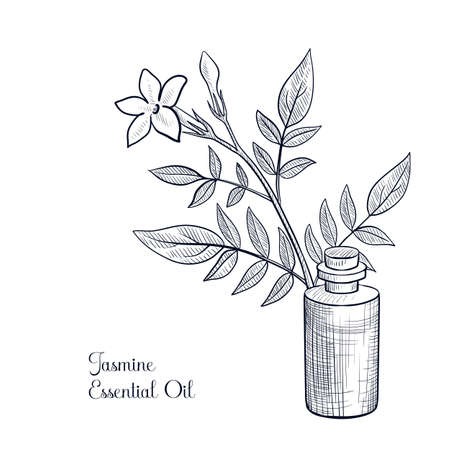 vector drawing jasmine essential oil