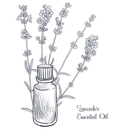 vector drawing lavender essential oil