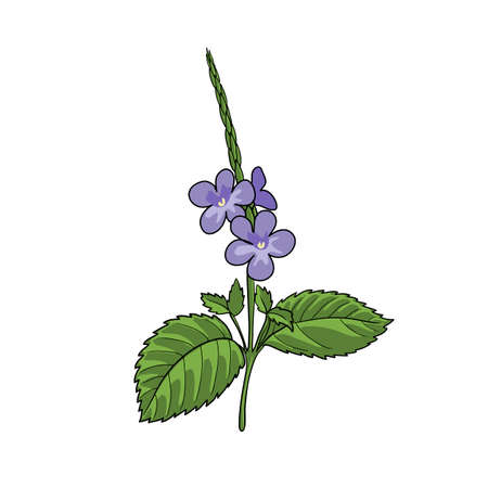 blue snakeweed vector illustration