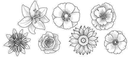vector drawing set of flowers Vecteurs