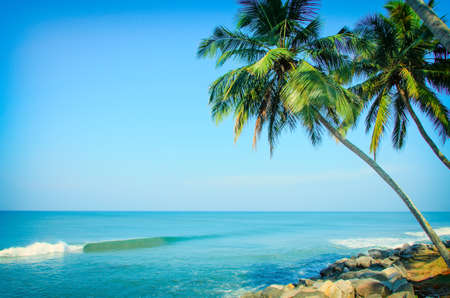 Tropical Indian village with coconut palm trees near the road and blue ocean in Varkala, Kerala, India